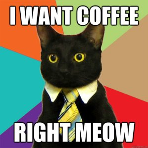 coffee business cat