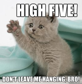 whos awesome high five kitten