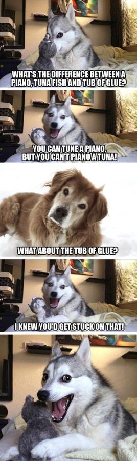pun-dog-pun-husky-03