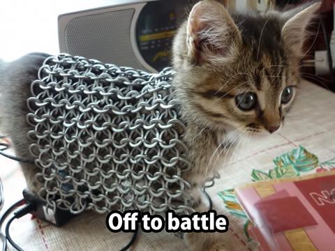 kitten in armor