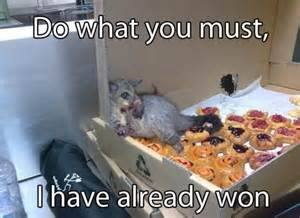 pizza rat won
