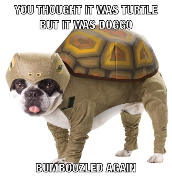 doggo turtleboozled